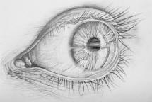18786916 - pencil drawn anatomy of a human eye